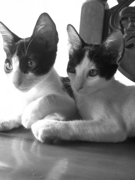 maru and momo